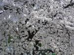 shonborism2011-04-10