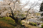 shugoro2013-03-25