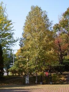 小樽市なえぼ公園にて2014年10月8日撮