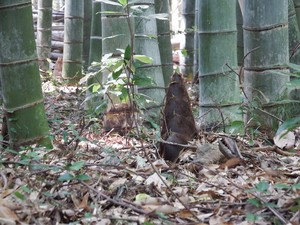 [姫路・京都の旅]竹の寺にて2015年4月2