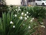 takase222013-04-16