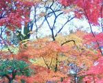 takuto-akira2012-12-05