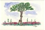 中央分離帯の立木