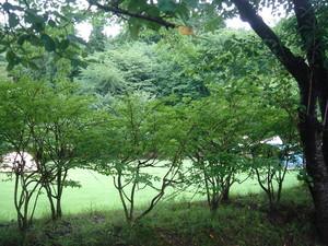 森の中でキャンプ@山形