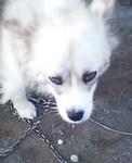tomoey2004-09-01