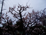 toyotoki112008-03-15
