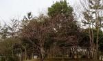 toyotoki112008-03-17