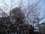 toyotoki112008-03-18