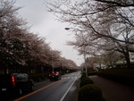 toyotoki112008-03-30