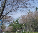 toyotoki112009-04-13