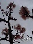 toyotoki112012-04-01