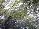 toyotoki112013-05-12