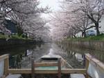 tsuchiura2009-04-13
