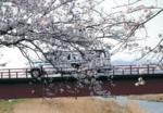 tsuchiura2012-04-01