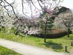 tsuchiura2012-04-05