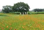 tsuchiura2014-06-26