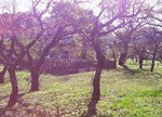 tsuchiura2014-11-19