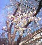 tsuke2004-03-27