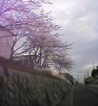 tsuke2004-03-30