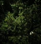 tsuke2004-03-31