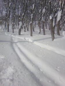 yamanouta2012-01-09