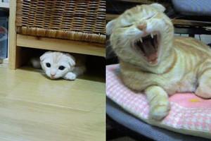 yaneurao2007-04-16