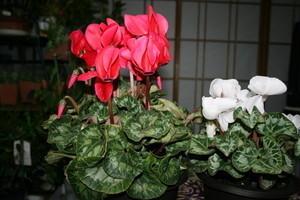 yatsugatake2007-12-22