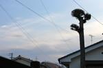 朝日が雲に遮られた、東の空。(27.1.26