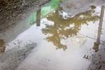 水溜りに、「リギダ松」が…。