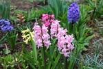 春香団の花々も、雨に濡れて。