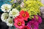墓前に供える「お花」。(28.9.22)