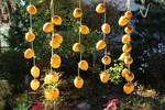 最終の「吊るし柿」