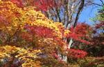 紅葉の名所・鼻顔(はなづら)稲荷神社