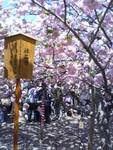 yukiboh2008-04-20